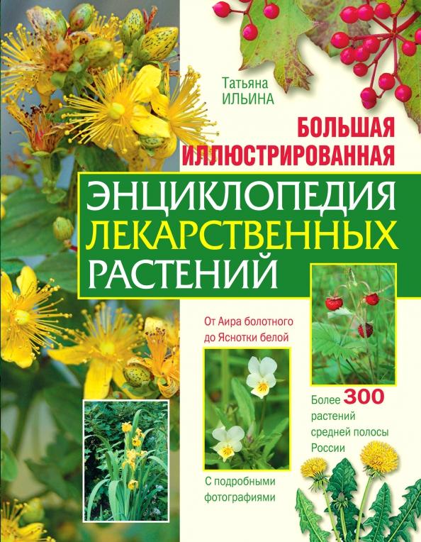 правилам справочник лечебных трав в картинках дизайн придает